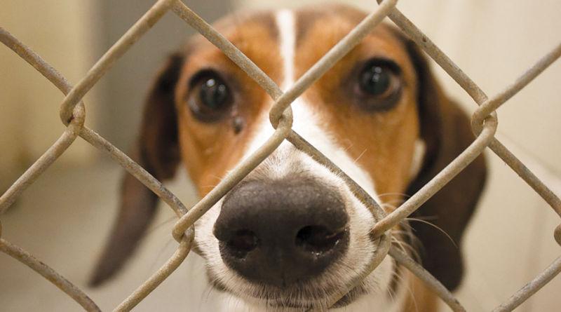 Projeto para adoção de cães e gatos durante a pandemia