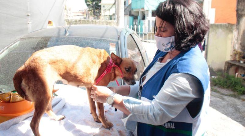 Equipe resgata cadela que sofria maus-tratos