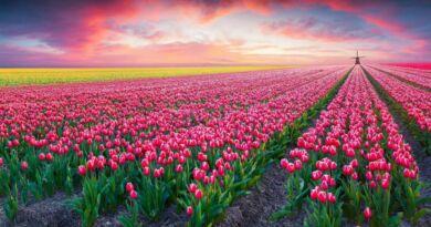Início da Primavera