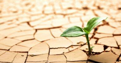 Dia Mundial de Combate à Desertificação